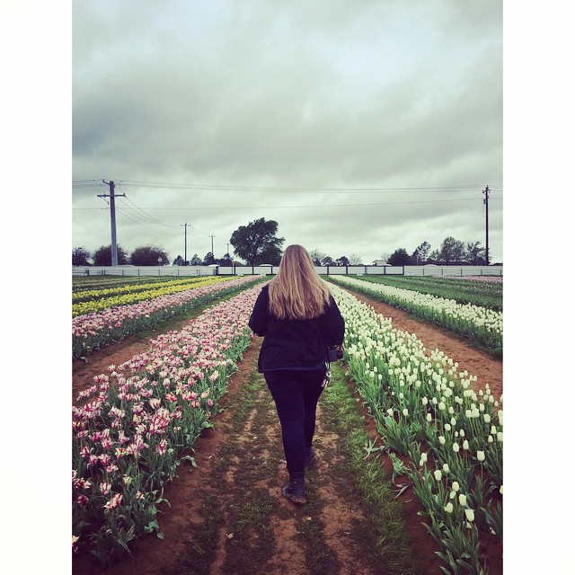 Here's that tulip field in Pilot Pointwe wrote about in last week's Seen and Heard.