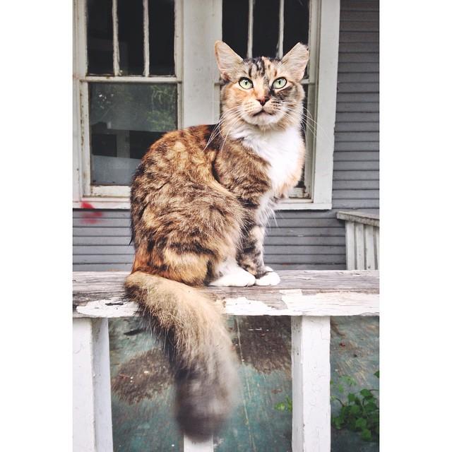 A @CatsofDenton stray.