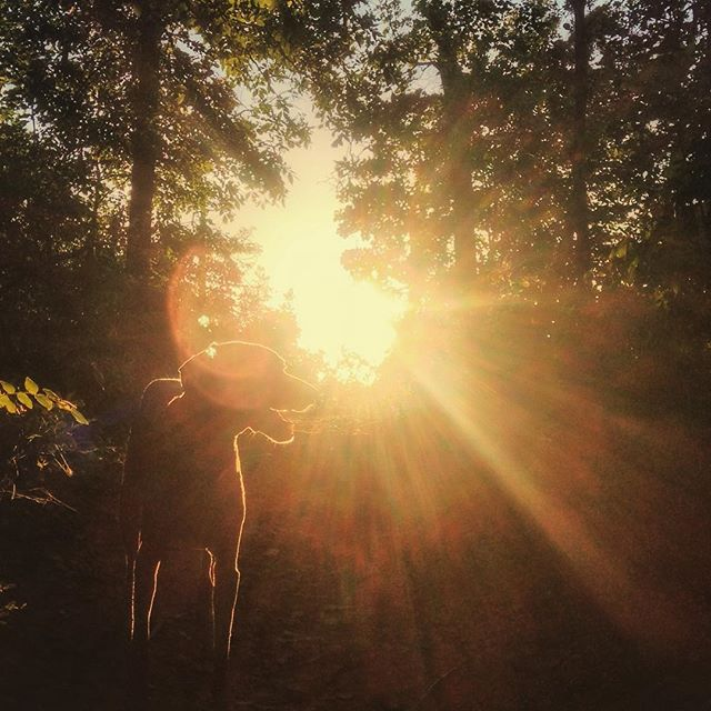 Dogs and the sunset.