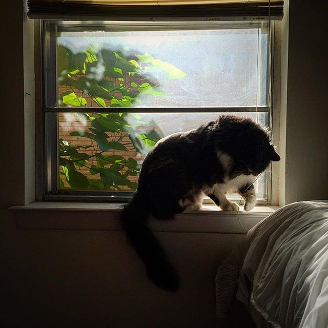 @too.soon.junior and window cat.