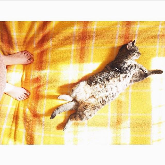Sunny cat via @catsofdenton.