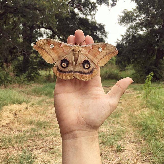 @Breafkast and a big moth.