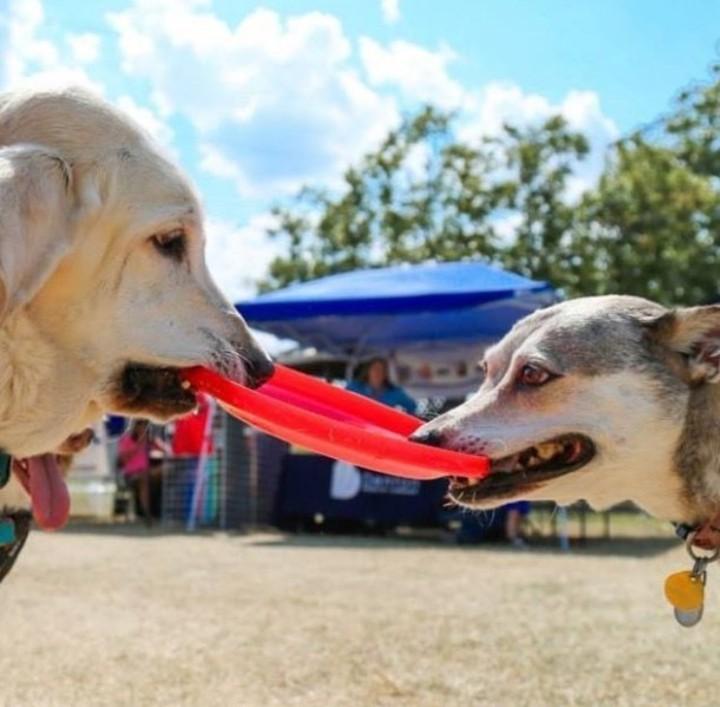 Dog Days of Denton was on Saturday.