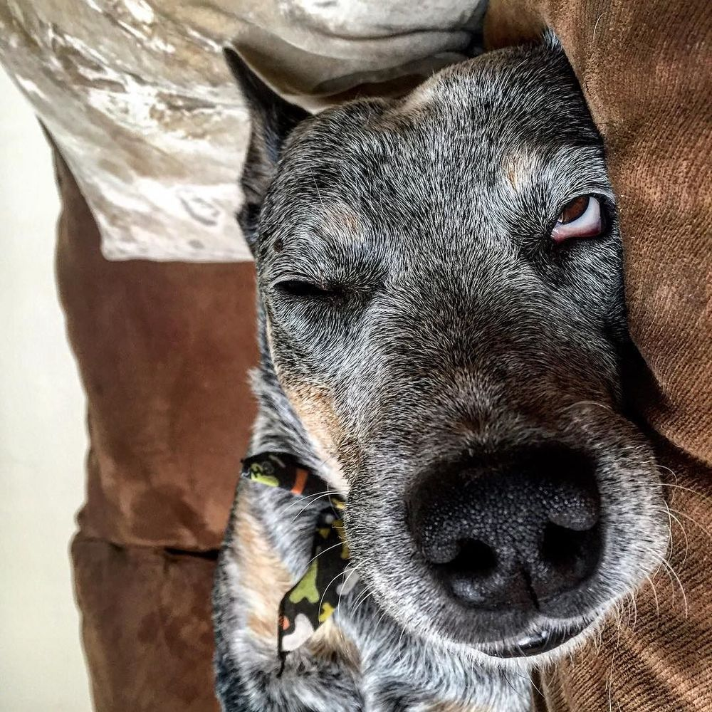 We're kinda feelin' like this right now, too, dog. @clarabearhandberg