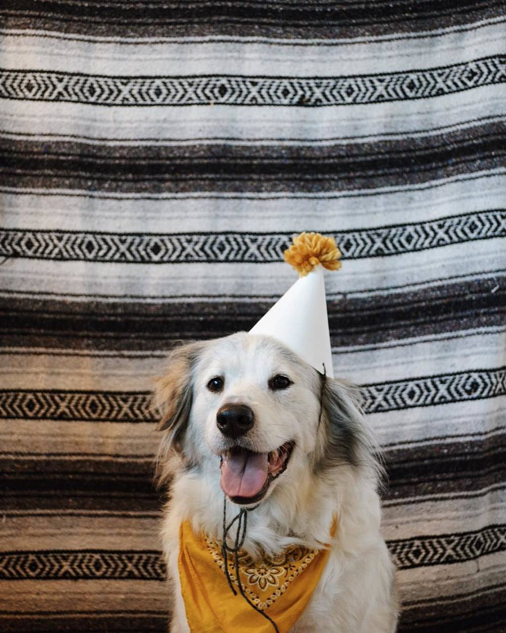 Dogs and birthdays by @Lynzi.