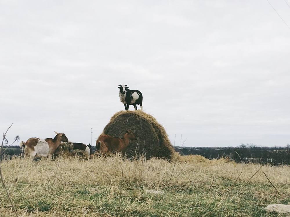 @jadewintersee and the hay king.