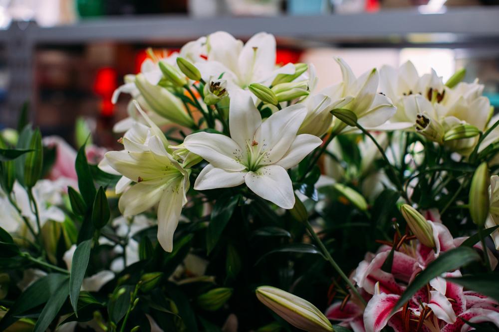The Shop On The Corner The Flower Garden We Denton Do It