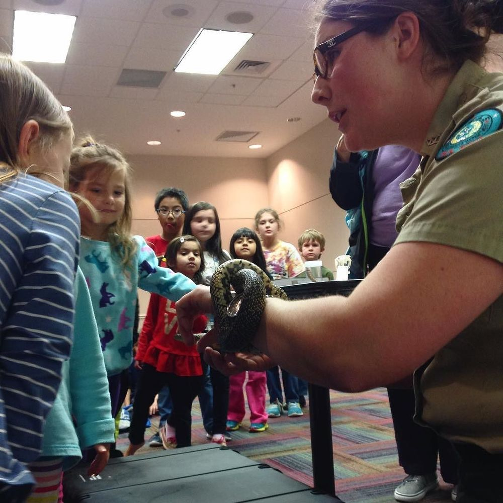@dentonpubliclibrary apparently now rents out snakes. Actually, this is a kingsnake that a park ranger brought to the South Branch Library to show to some eager young learners.