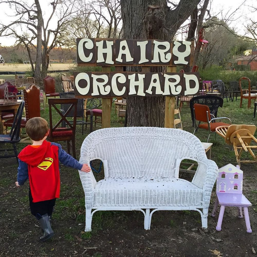 @jesslorene down at the Chairy Orchard, Denton's newest photo-op.