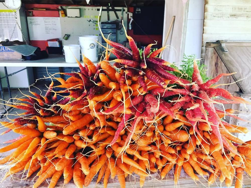 @rootedheartfarm's carrot haul.