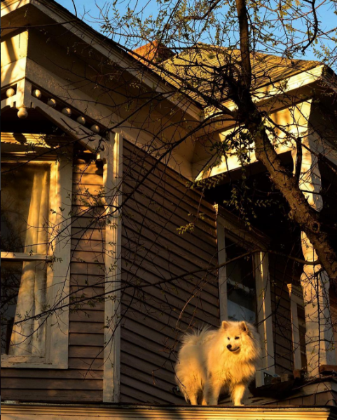 """@indianajoe023 got this shot of the fluffy - yet firm footed - """"roof dog"""" doing his thing."""