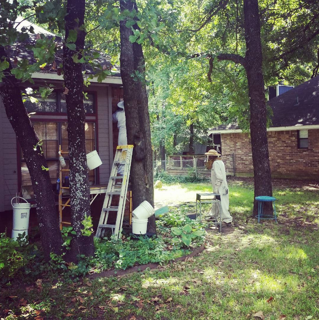 Beekeeping in Denton from @missvickisays.