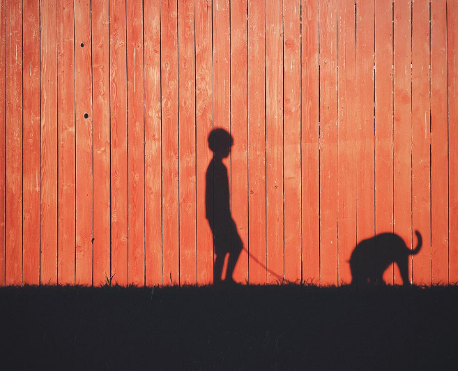 We'll just make this the dog row with this shadow shot from @__will featuring a boy and his dog.