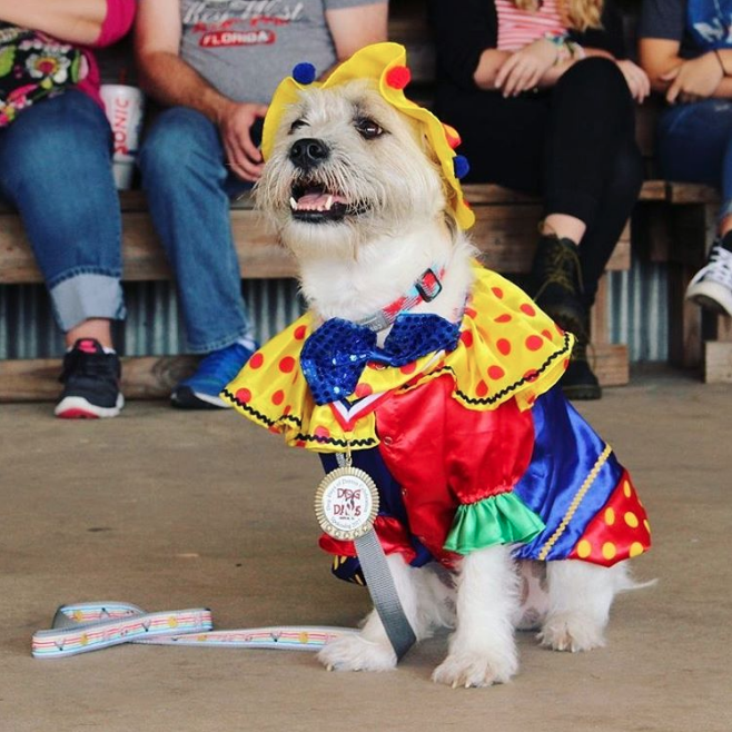 "Here's @dogdaysdenton's new ""spokesdog"" for the next year. Yes, it is a dog in a clown outfit."