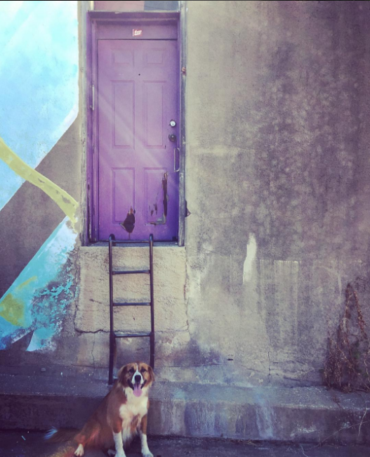 @aereis22 checked out our guide to a few of our favorite photos spots in Denton and got this photo at the purple door.