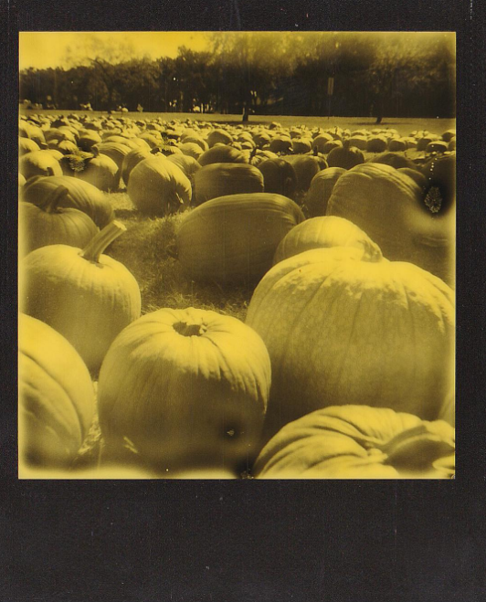 @studiodfw hanging with some pumpkins and instant film.