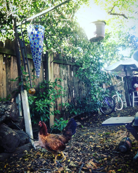 Chickens and backyard fall bbq's from @aspenrayne.