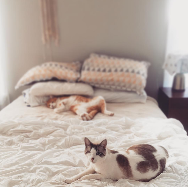 This has been a rough week so here's a photo of some beautiful cats on a comfy-looking bedspread. Photo by @queenofbeam.
