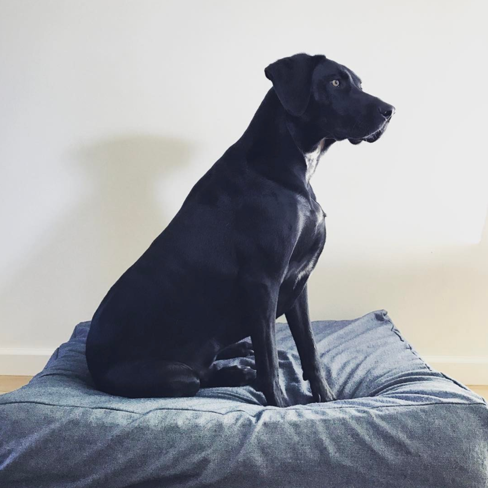 We're suckers for regal photos of dogs like this one from @lifeofahasserd.