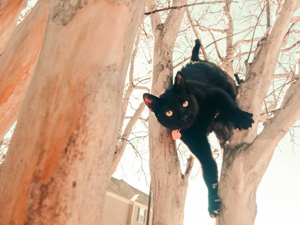 @germantorrestx found a cat in a tree.