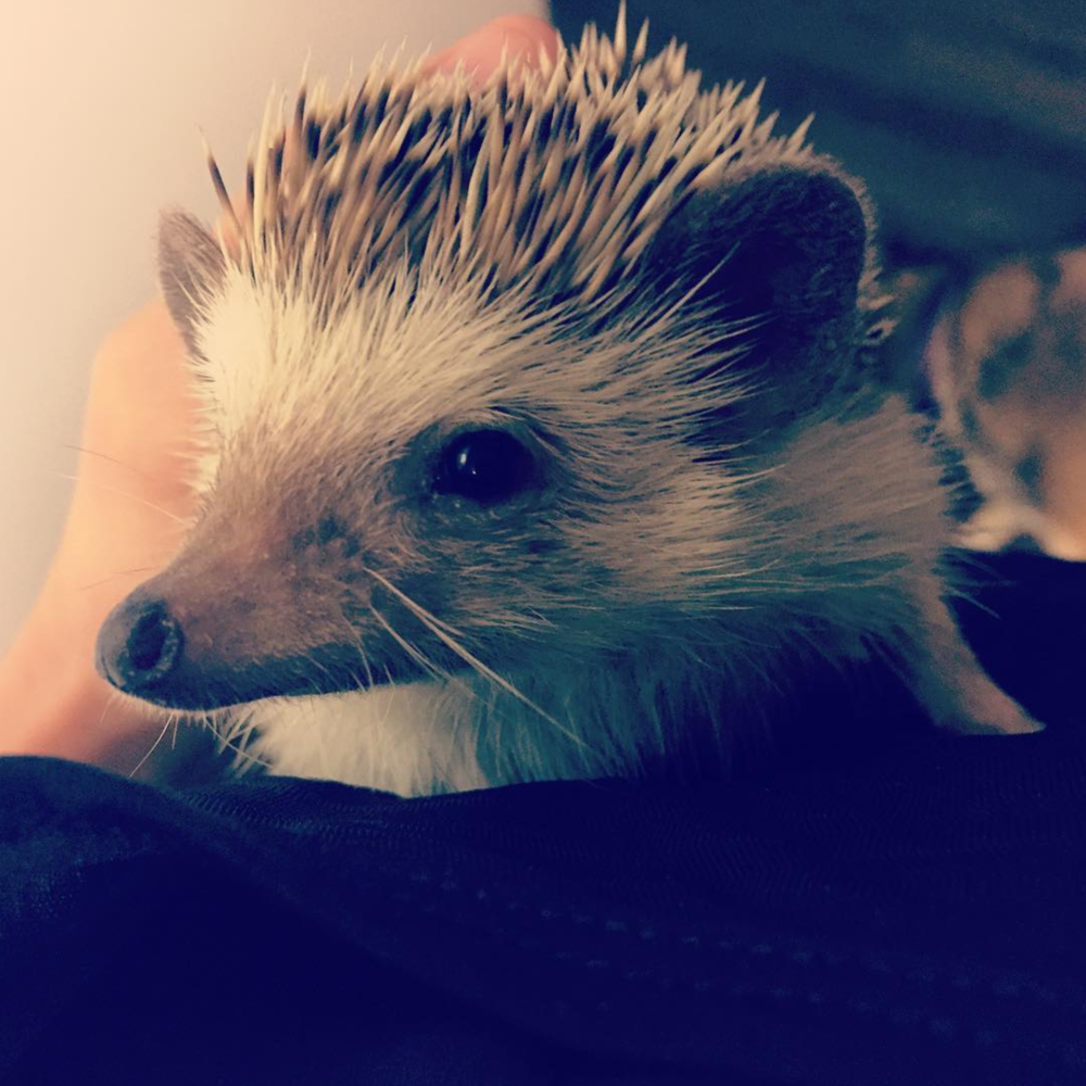 We already featured a photo from @stellar_yogi once this week, but she also shot this incredibly cute hedgehog - so cute, in fact, that we couldn't NOT include it, too.