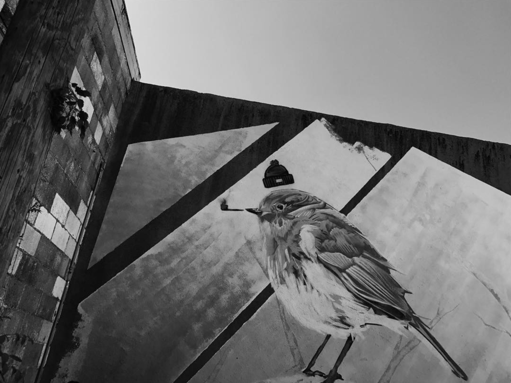 Our favorite mural bird photographed by @andyo7 .