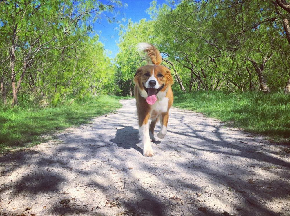@aereis22 on a spring hike with a happy-looking best friend.