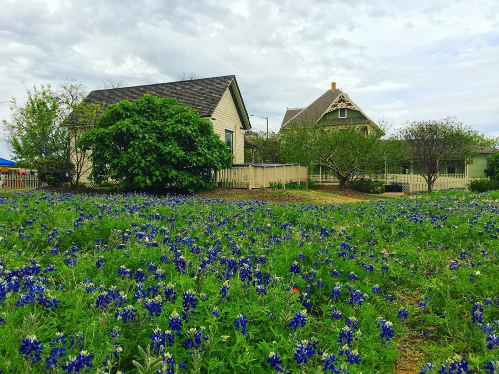 @missiedriver and some bluebonnets by Bayless Selby.