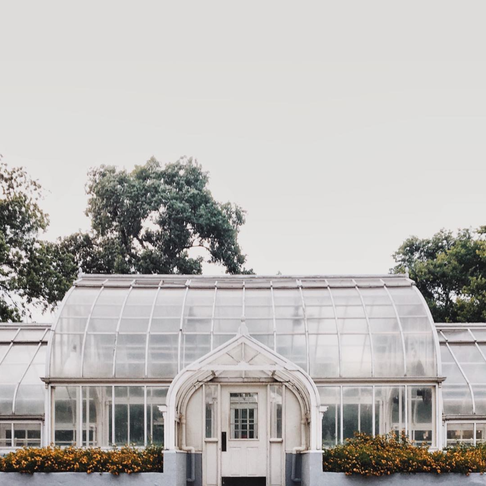 Did y'all know the TWU Greenhouse inspired the inception of the Native Plant Society of Texas? Read more about the beautiful Denton facility  here . Photo by @_ricapaige.