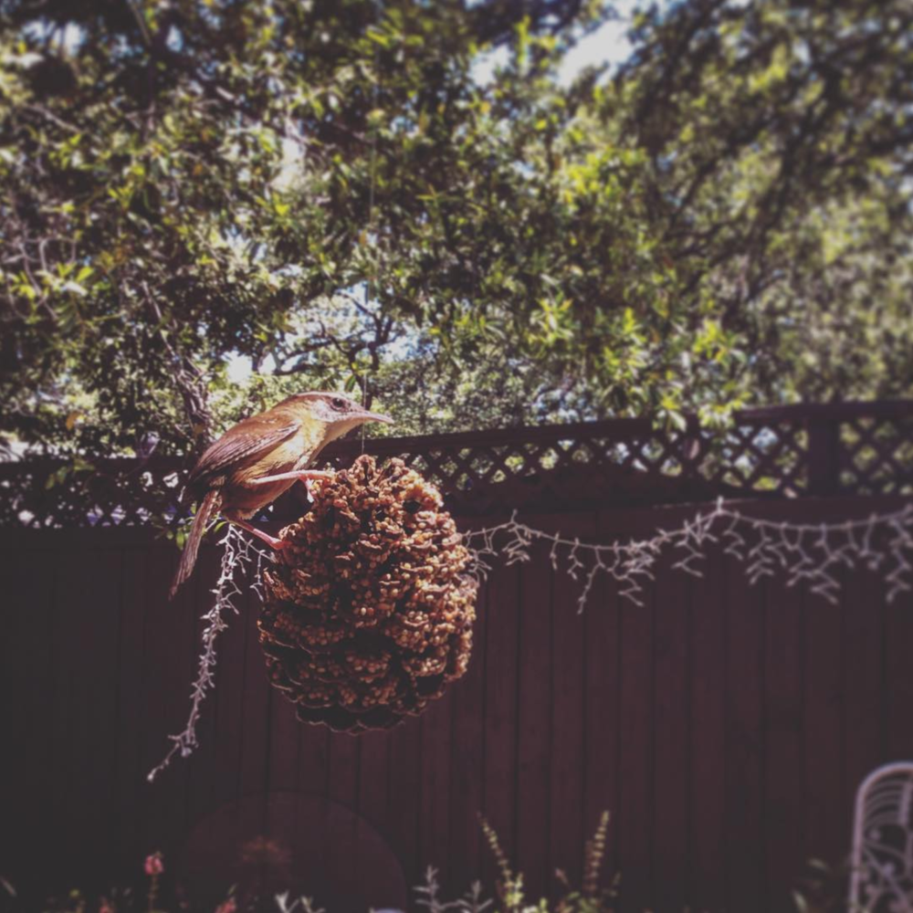 @dentonjohanna and a popular pinecone bird feeder.