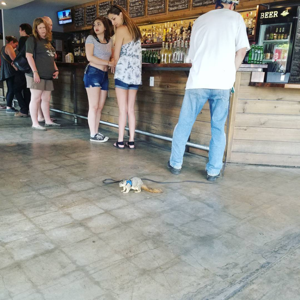 @earthmeetsman photographed this pet squirrel on a leash in Harvest House.
