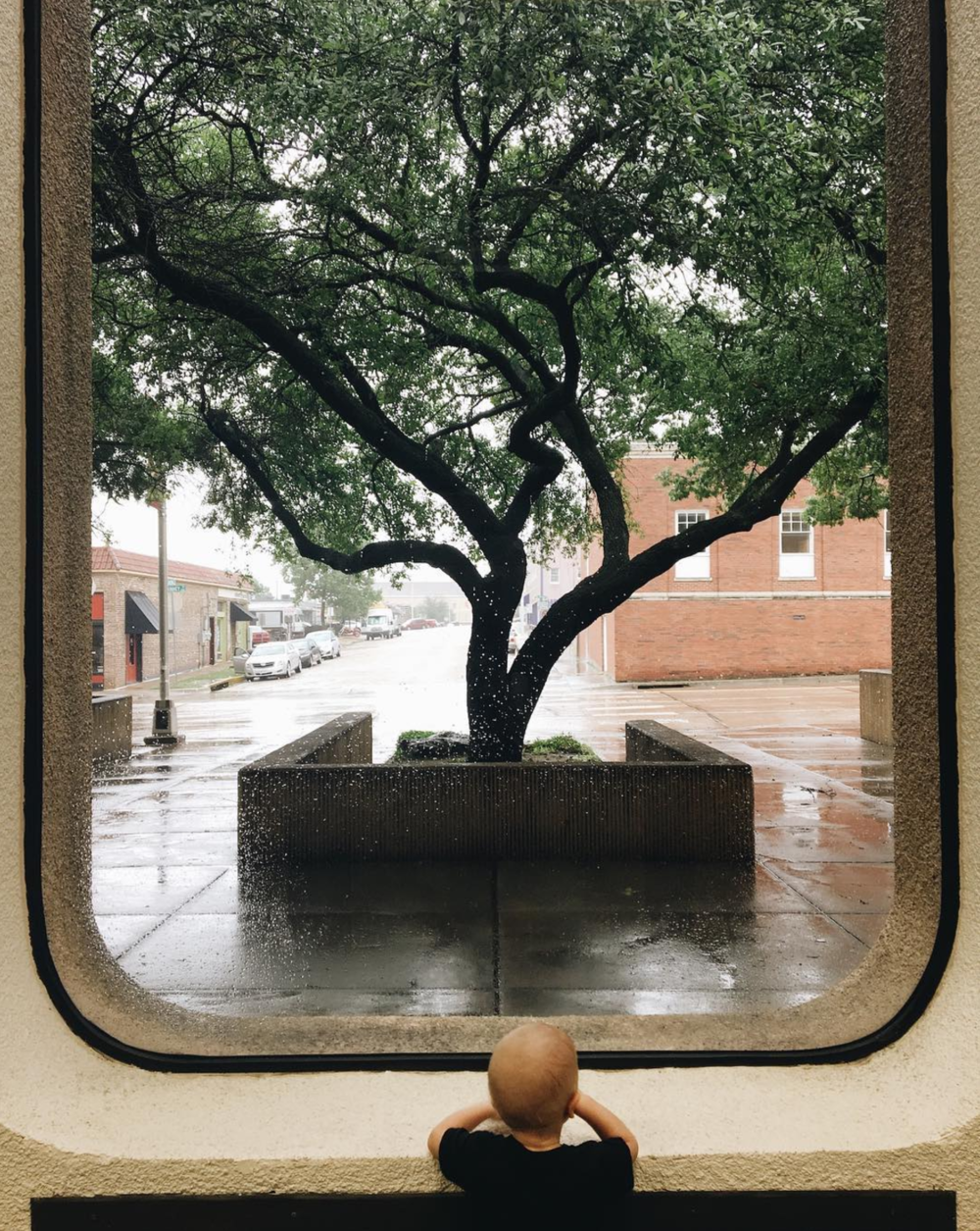 Looking out at the rain and a tree from the post office. Photo by @jadewinterdays.