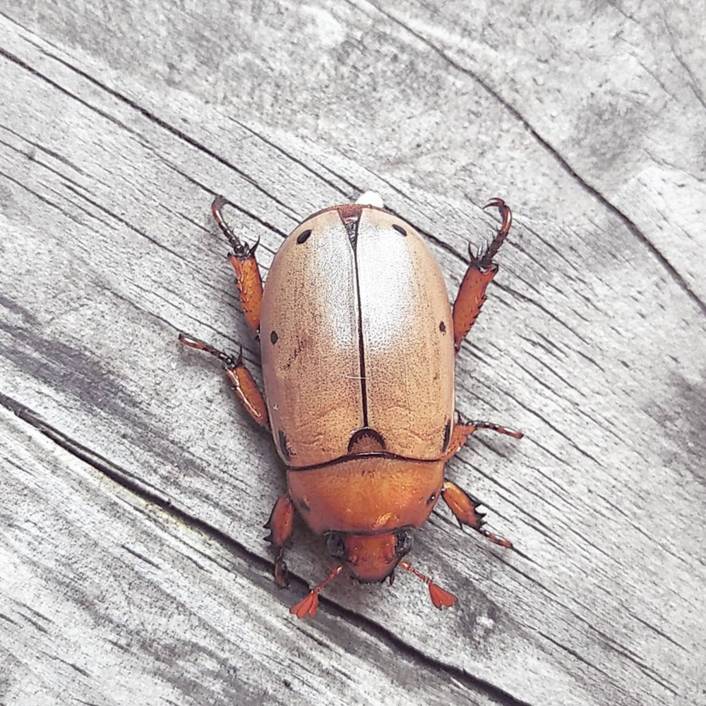 June in Texas means tons of June bugs. Photo by @dentonjohanna.