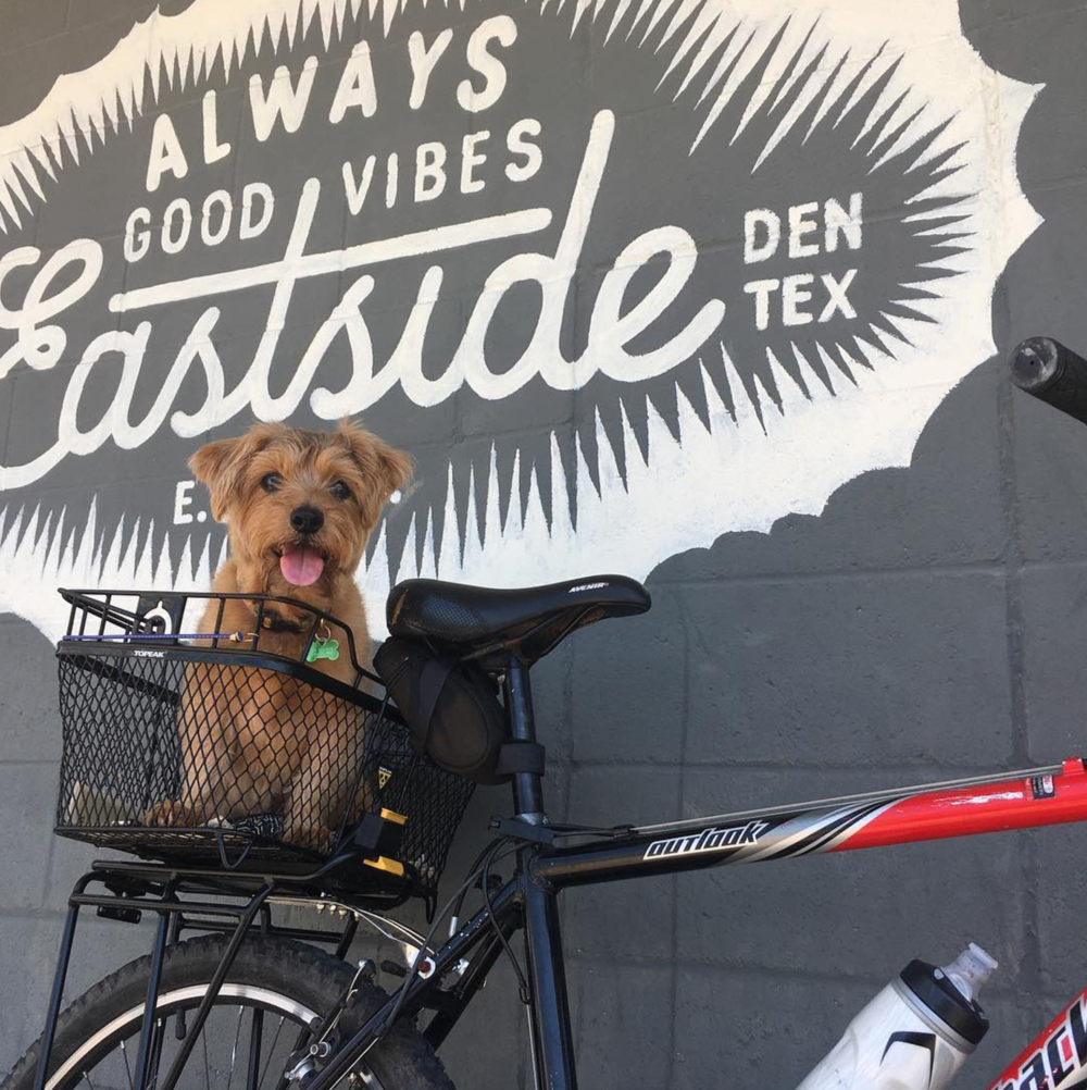 "@tjcgtr calls the combination of a dog, a bike and East Side the ""Denton trifecta"" and we agree."
