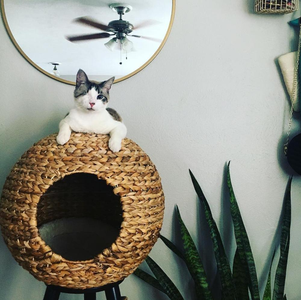 @queenofbeam and her cat.