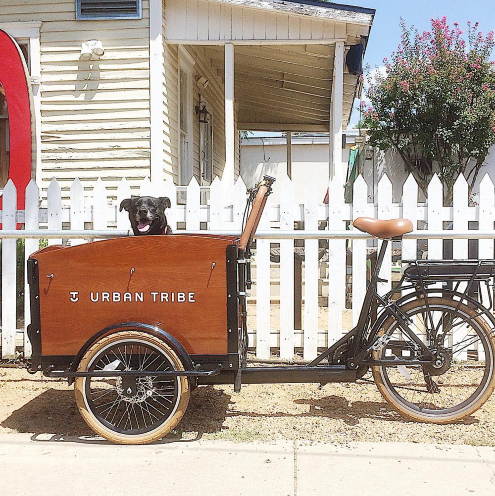 Even dogs like @urbantribecargobicycles. Want to know more about these Denton-made bikes? Check out our article from last week.