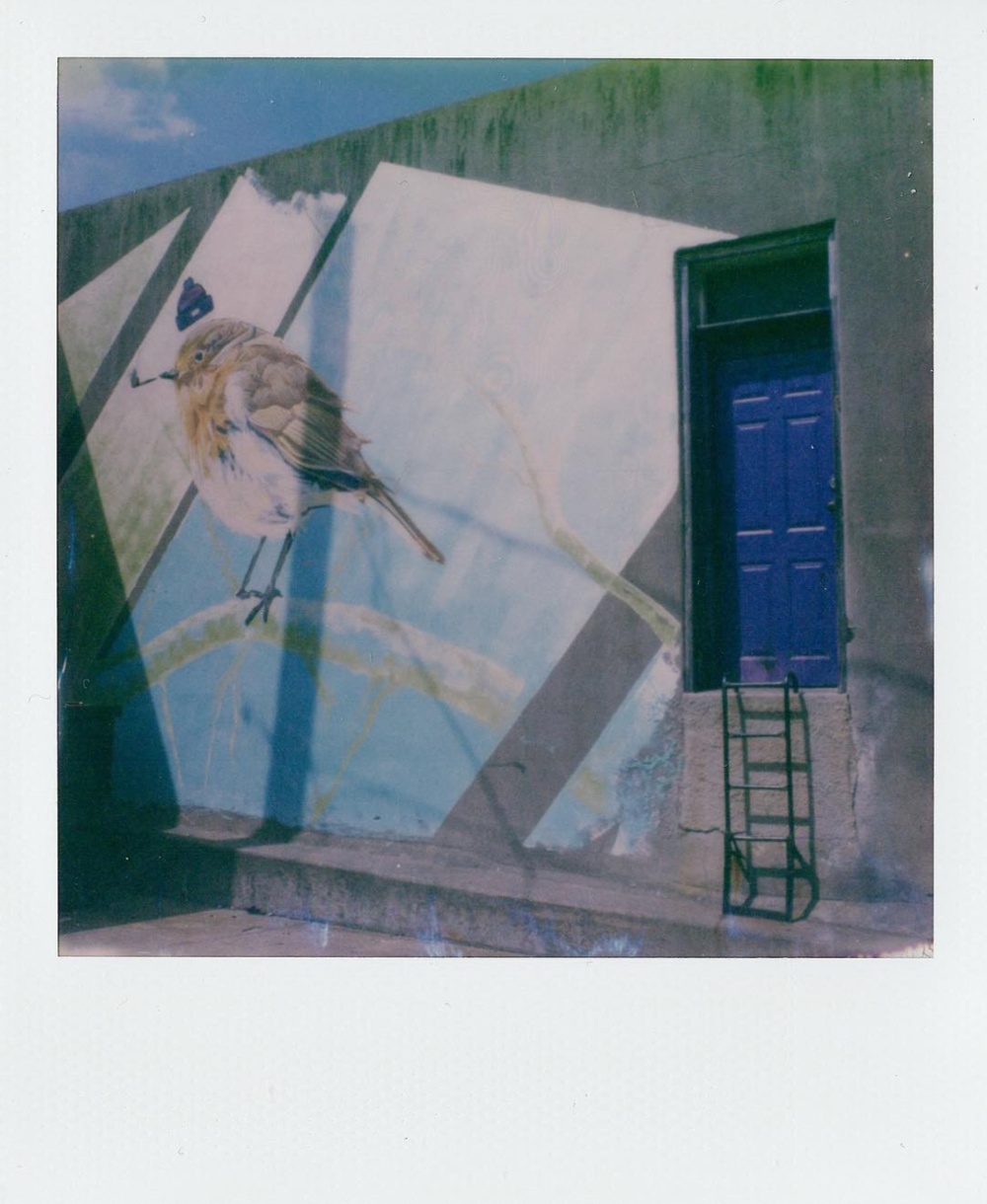 New Denton-based instant film account, @instantdenton, snapped this shot of the purple door.