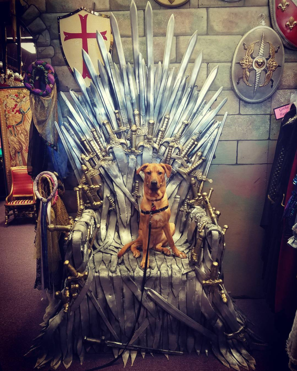 When the dire wolf takes the throne. Photo by @storyjoey.