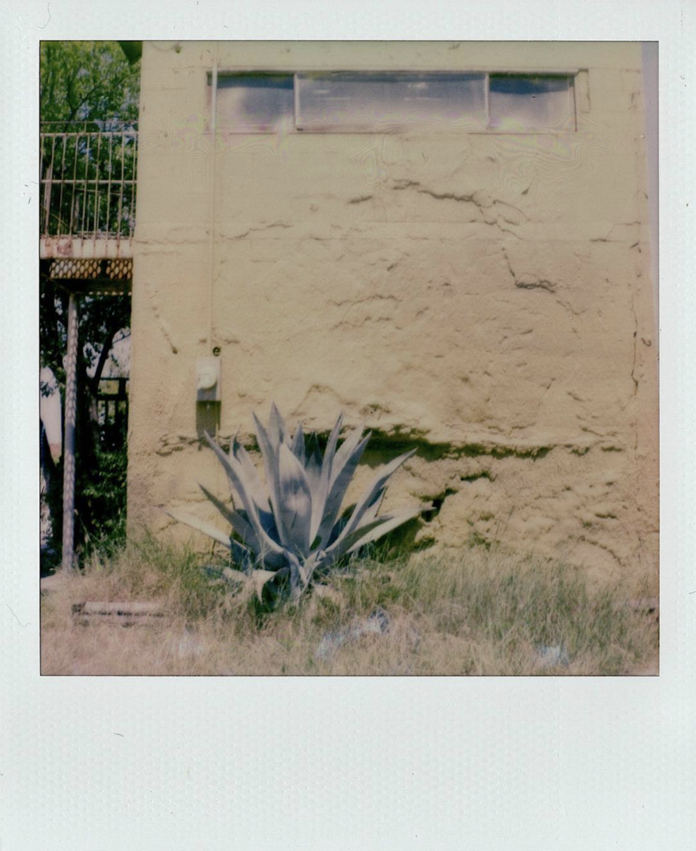 @instantdenton captured some agave on film.