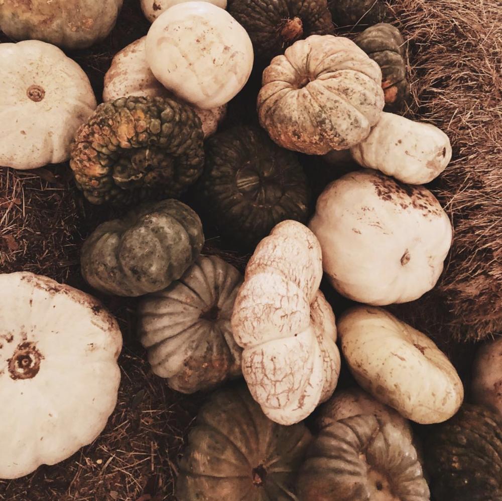 It's decorative gourd season for @skylarsummer.