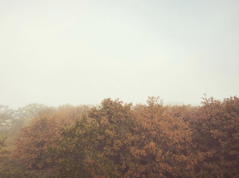 @lifeofahasserd and some foggy morning trees.