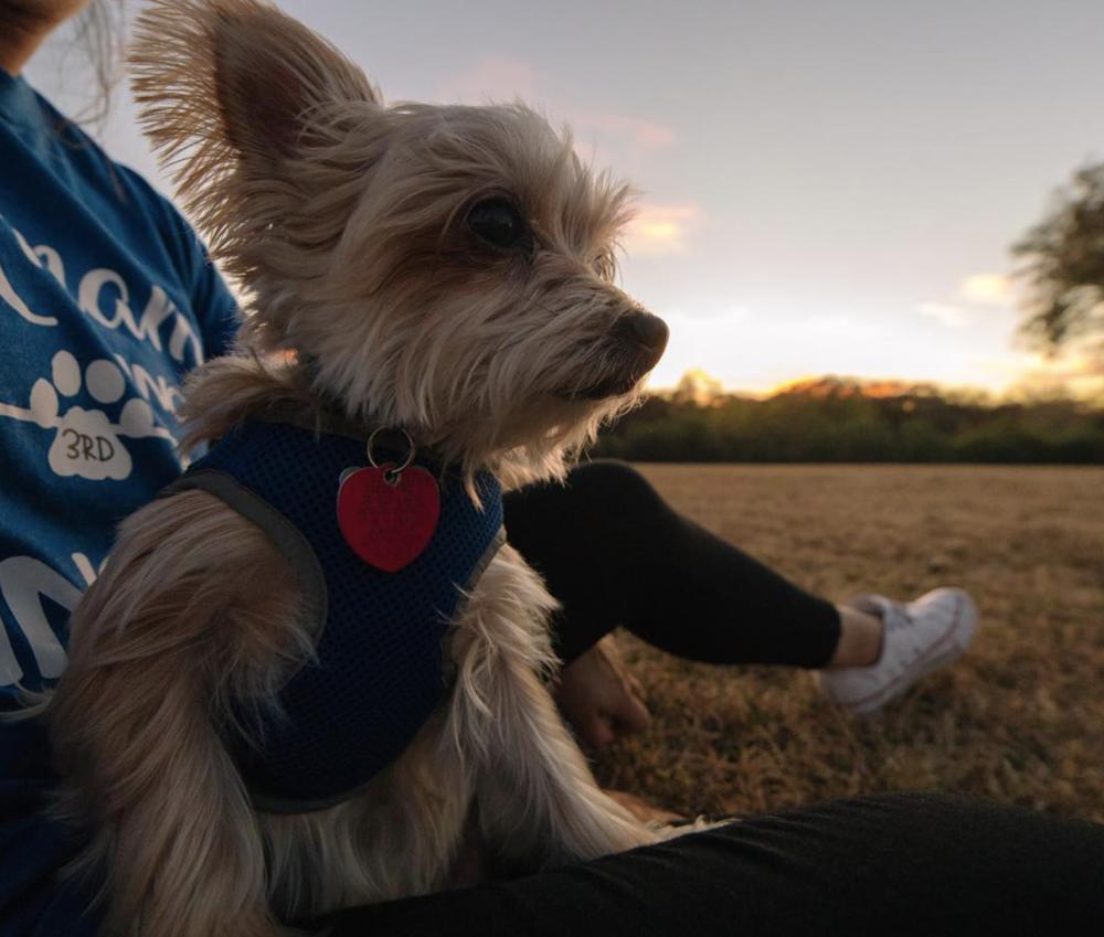 @anthonynajera90 with a dog sitting self portrait.