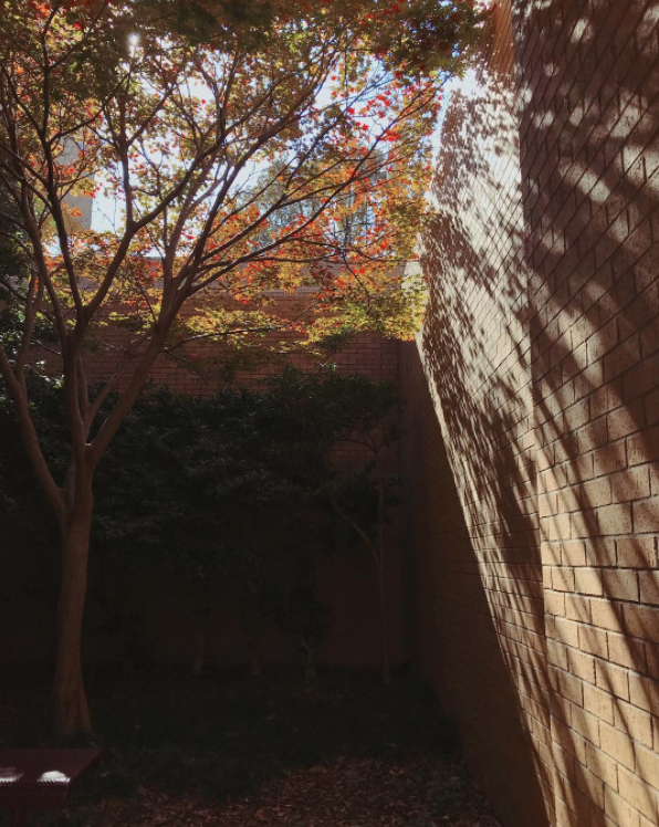 @_jackles some fall leaves and some shadows.