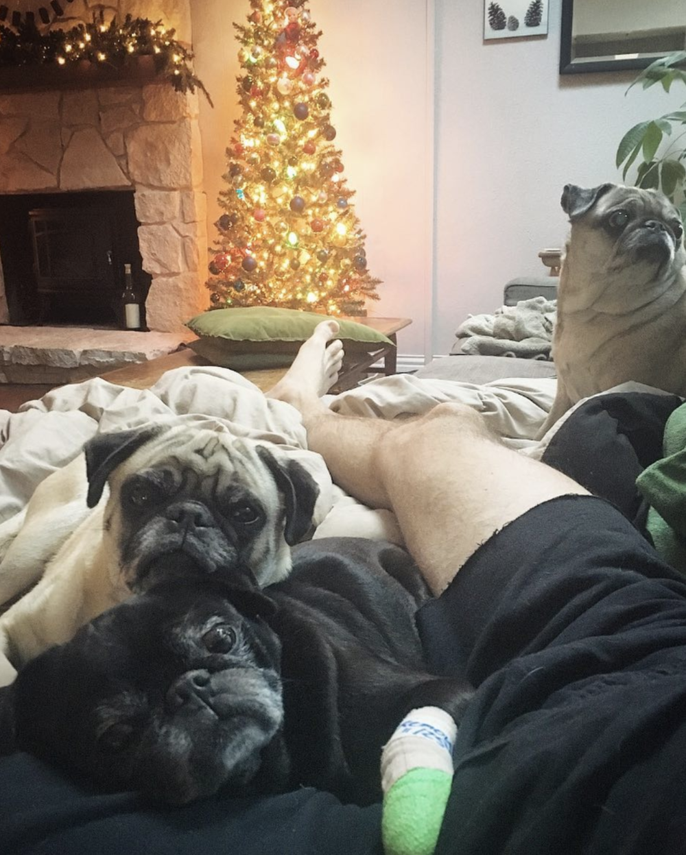 @texaspuglife with a crowd on a couch.