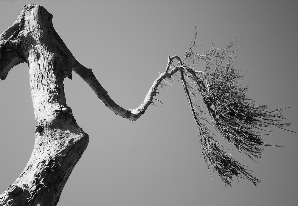 © Kimberle D'Aria, 2014