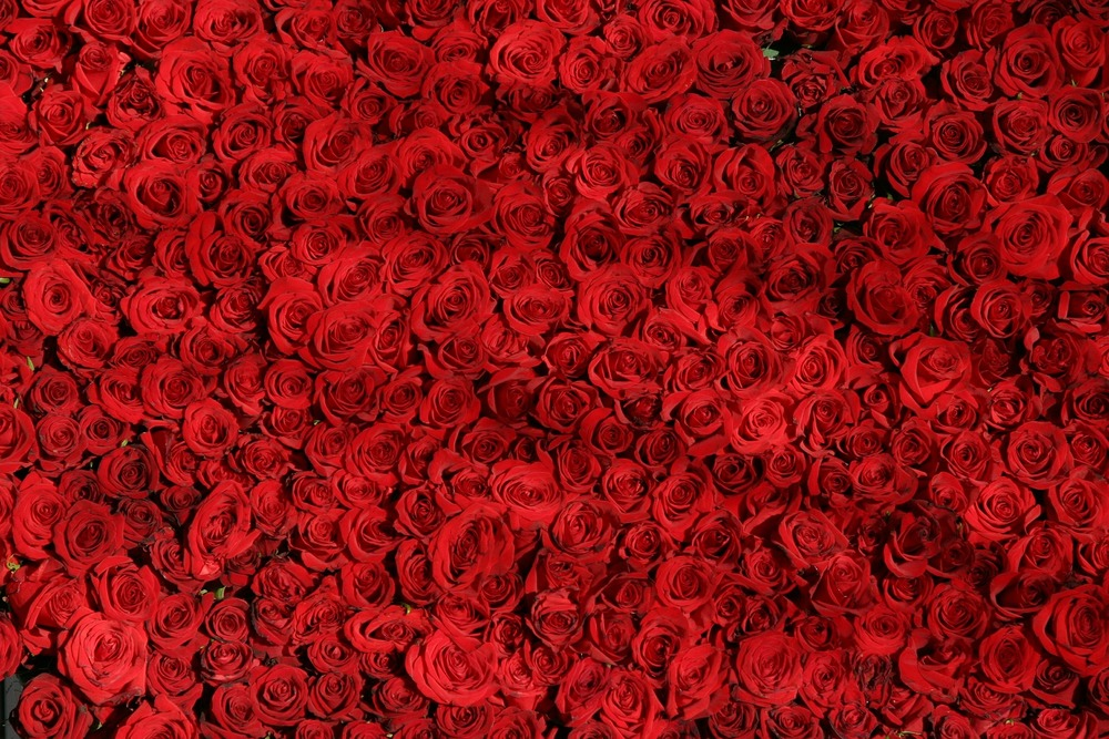rose bed.jpg