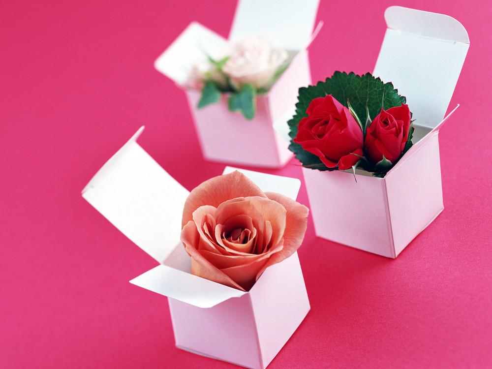 single rose in box.jpg