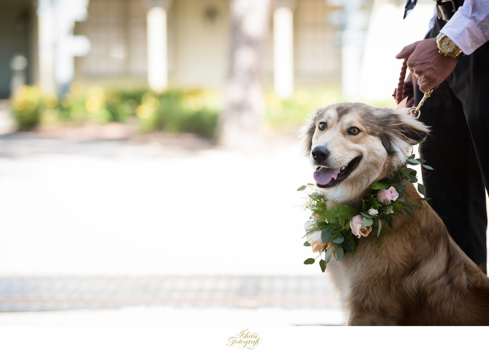 dogs-in-wedding-at-the-historic-smithville-inn