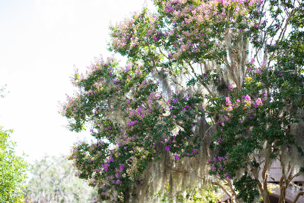 Trees at Brookgreen Gardens.
