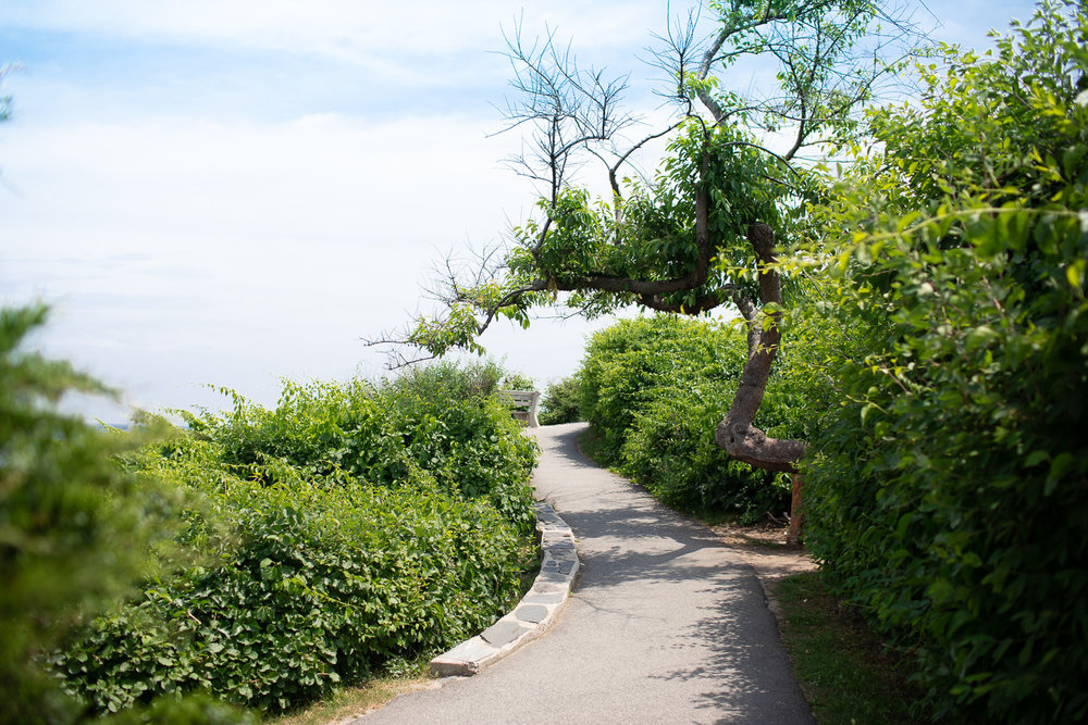 A tree grows on the Marginal Way path.